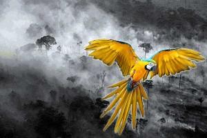 bird-amazonas-fire-300x200