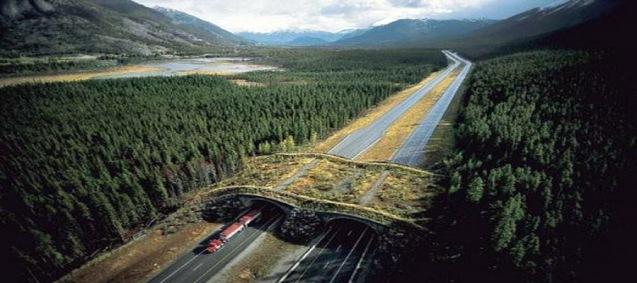 banff-national-park-alberta-canada-animal-bridge-wildlife