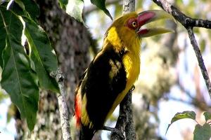 aves-en-brasil