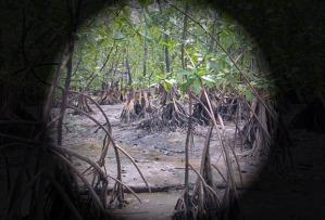 venezuela-manglar-anca-24
