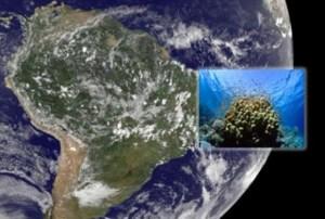 corales-marinos-costa-atlantica-sur-300x203