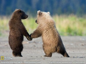 grizzly-bear-cubs-300x225