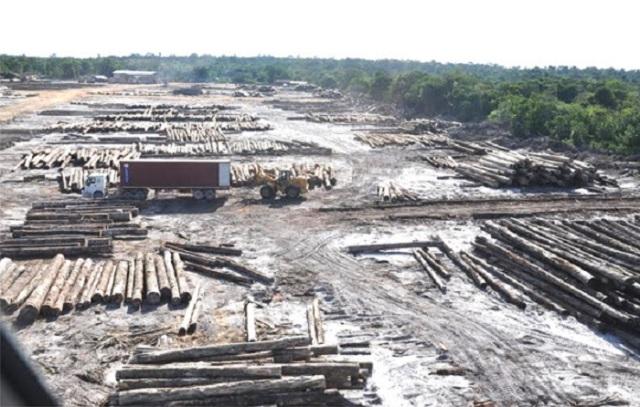 deforestacion-esequibo-1