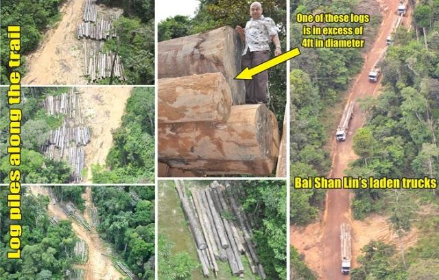 deforestacion-esequibo-2