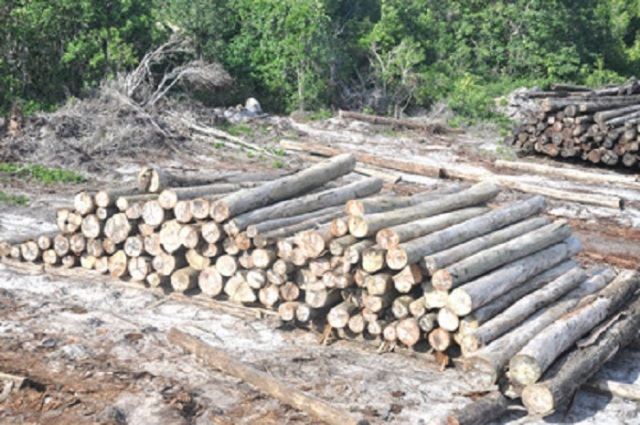 deforestacion-esequibo-3