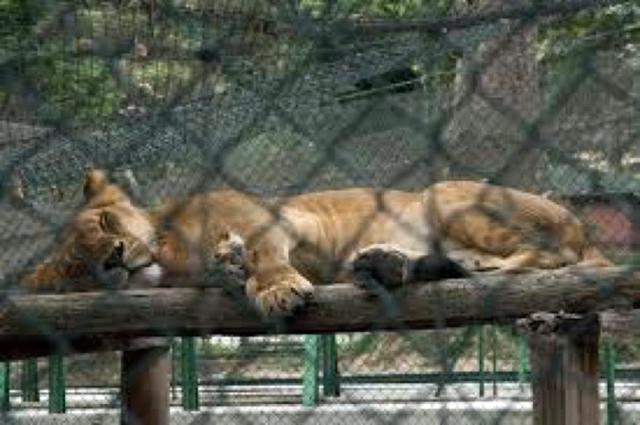venezuela-zoos